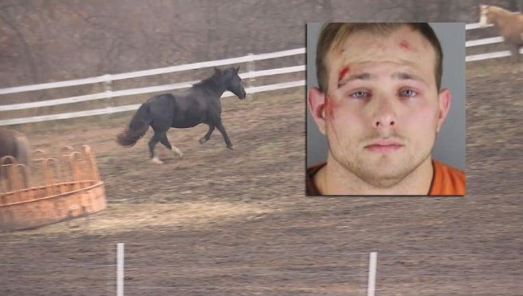 e14a12e2-horse punch arrest_1509970493676.jpg