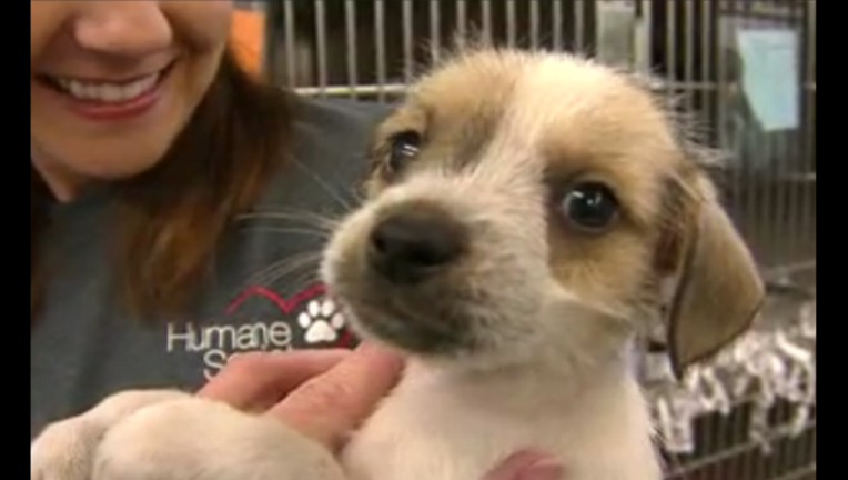 1f83f3de-humane society puppy_1443903957920.png