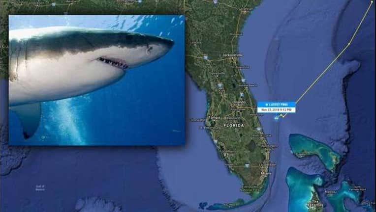 fca79db3-katharine-shark-track-florida_1543271814962.jpg