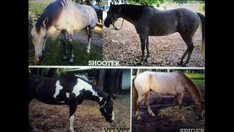 a4b65e61-missing horses_1447366411435.jpg