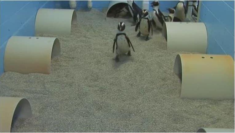 4fb8d984-penguin_1449172223784.JPG