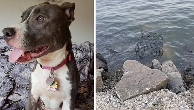 ce86ceb6-pit_bull_caged_left_to_drown_NJ_073118_1533034392012-401096.jpg
