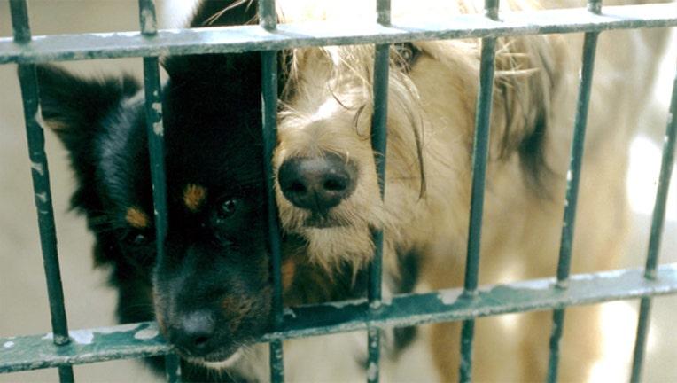 bc01ca9e-shelter adoptable dogs_1501273704473.jpg