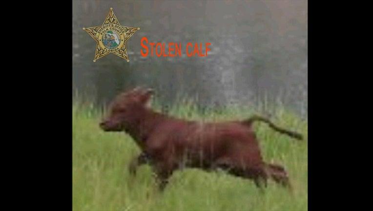 9f0474c8-stolen calf_1509470269537.jpg