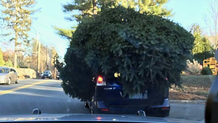 318a1a32-tree on car_1511819382653.jpg