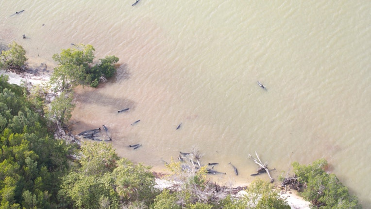 whale stranding2_1484595358609.jpg
