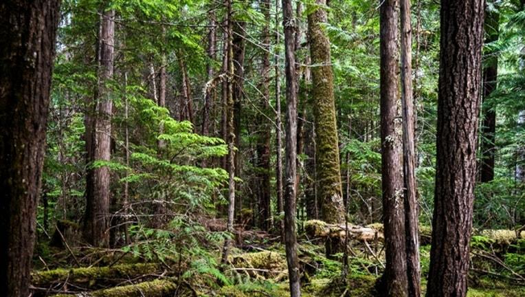 cbc46f6b-woods-britain_1508157593654-404023.jpg