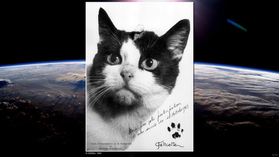 f86768fe-cat in space cerma_1476794935107.jpg