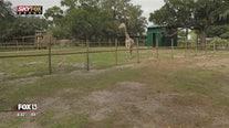 The view above Giraffe Ranch in Dade City, Florida