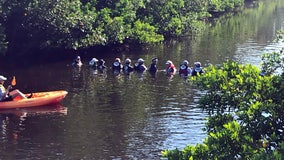 Human chain helps 'lost' dolphins escape from St. Pete canal