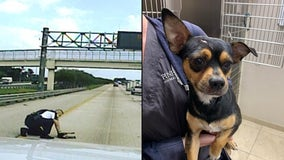 Pinellas Park officer dashes onto I-275 to save dog that had been hit by car