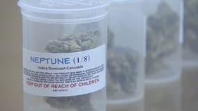 U.S. attorney won't pursue medical marijuana cases