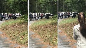 Tourists filmed getting dangerously close to a black bear in Tennessee