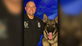 Retired St. Pete K9 dies after battle with cancer
