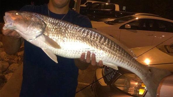 Good Catch: Redfish still have a hot bite