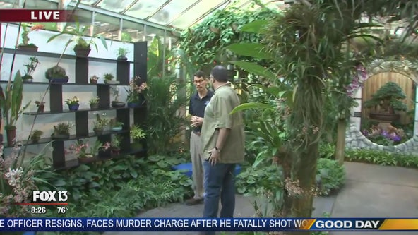 Expert shows off Selby Gardens' Orchid Show