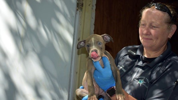 7 pups found in locked storage unit in 'decent' condition; officials still searching for owner