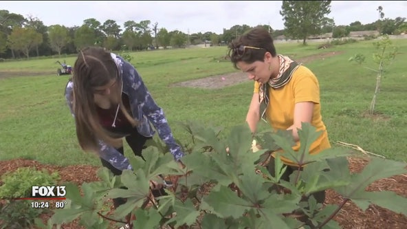 Program gets students growing: Harvests benefit 67 Sarasota County cafeterias