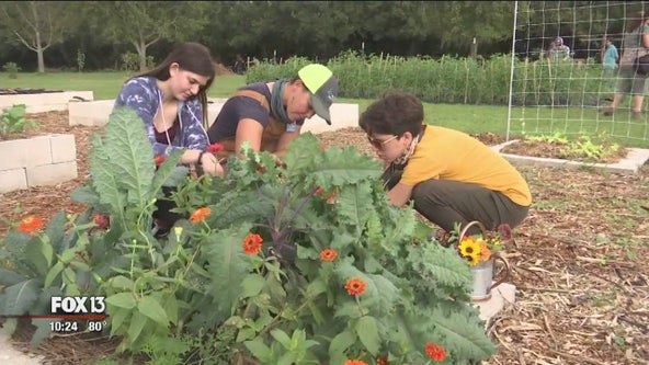 Crops now curriculum for Sarasota students