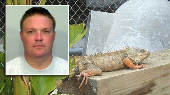 Inmate charged with feeding iguanas to alligator at Florida Keys jail zoo