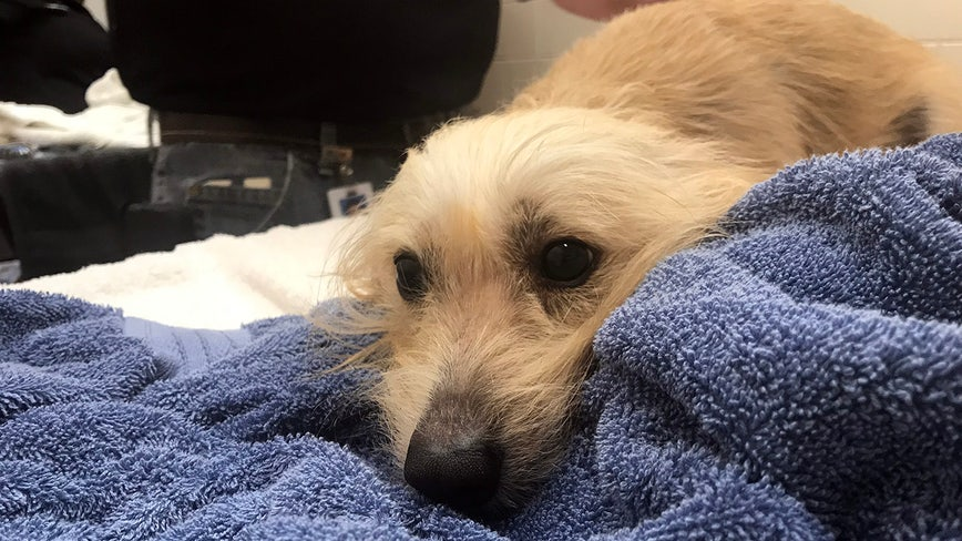 Medical care, baths, and hugs: Rescued dogs get some TLC