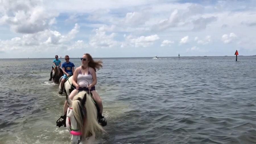 Pinellas County bans horseback riding near Skyway bridge