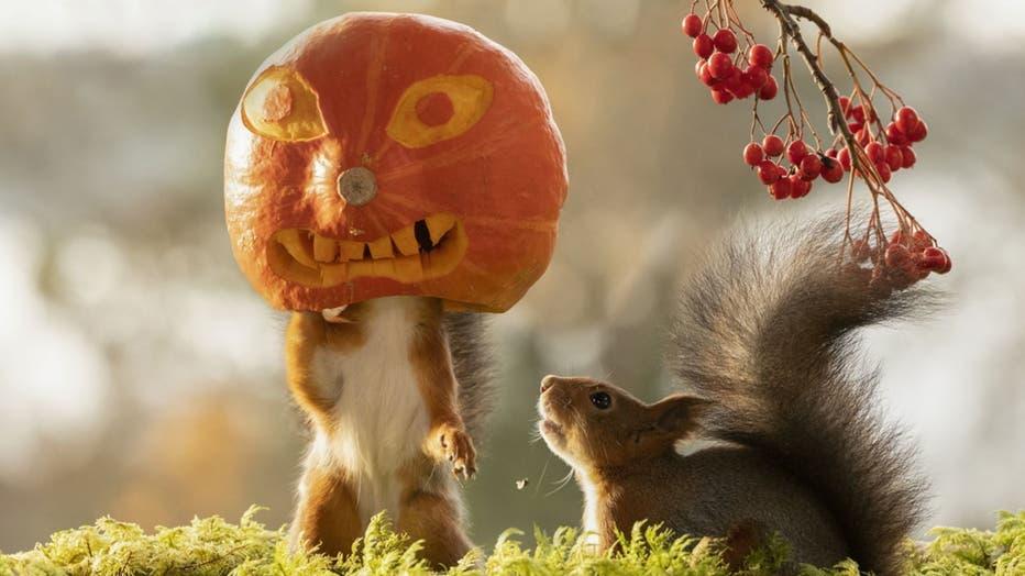 74f6f01f-squirrel-pumpkin-1.jpg