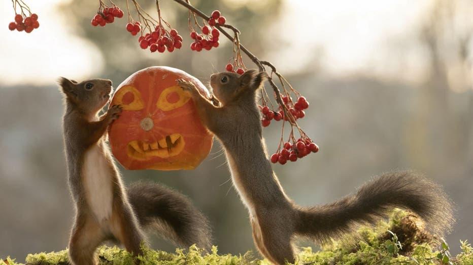 e3a573fa-squirrel-pumpkin-2.jpg