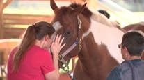 Horse therapy helps veterans deal with trauma