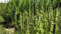 Florida has high hopes for hemp, but scientists warn state may get burned