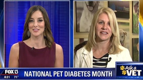 Veterinarian gives tips on what to do if your dog has diabetes