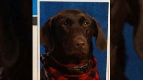 Very good service dog poses for yearbook photo at Arkansas elementary school