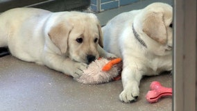 Over the years, Southeastern Guide Dogs has improved the lives of thousands