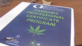 High level of interest in FGCU's cannabis class