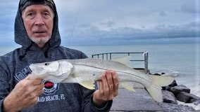 Good Catch: Snook are on the move