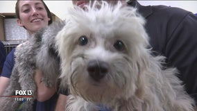 Adoption fees could triple for dogs seized from Tampa breeder