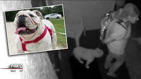 Four-legged burglary suspect turns out to be dog-napping victim herself