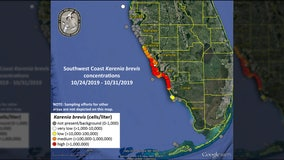 FWC: Low levels of red tide detected off Pinellas County