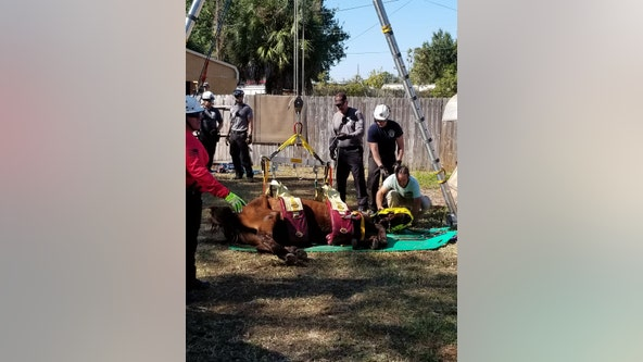 Pasco woman arrested for animal cruelty after malnourished horse dies