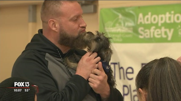 Adoption day for rescued dogs