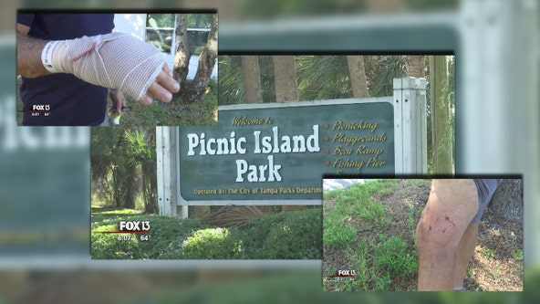 Dog owners take off after animals attack man playing disc golf at Picnic Island Park