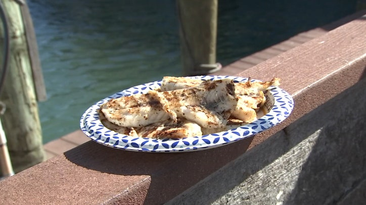Good Day Gourmet: Grilled Mangrove Snapper - FOX 13 Tampa Bay