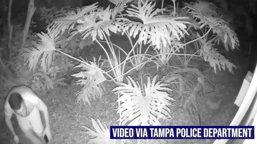 Tampa Palms prowler caught on camera peeping into bathroom windows