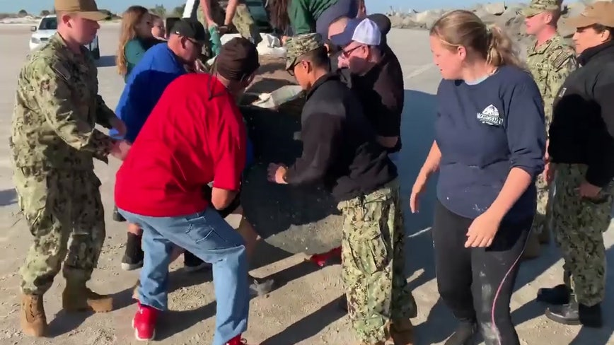 Navy personnel rescue manatee stranded on north Florida beach