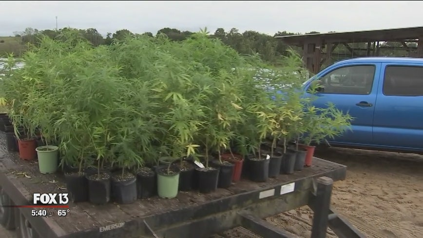 Florida farmers hope hemp becomes lucrative cash crop