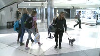 Safety tips for traveling with your pet during the holidays