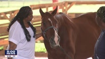 Veterans benefit from equine therapy