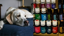 Essential oils often used in diffusing devices can be harmful to cats and dogs