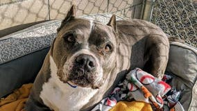 California dog at shelter for over 5 years adopted in time for Christmas