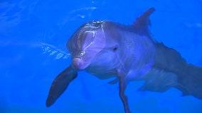 'Winter's Wonderland' takes over Clearwater Marine Aquarium